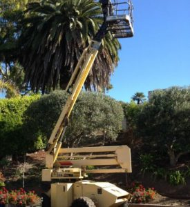 Boomlift for Trimming